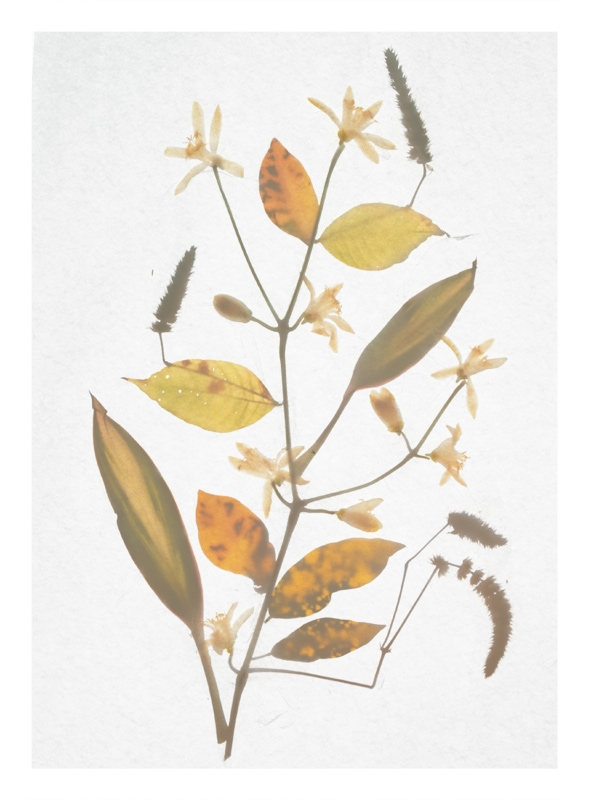 http://tscholitsch.com/files/gimgs/th-5_Herbarium_DIY_11.jpg