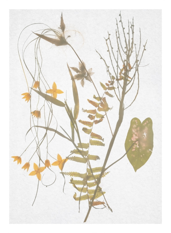http://tscholitsch.com/files/gimgs/th-5_Herbarium_DIY_2.jpg