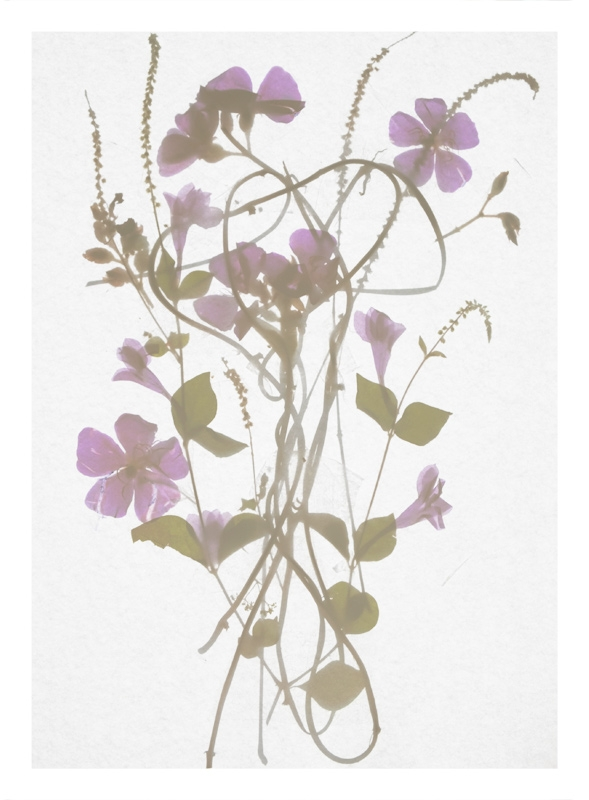 http://tscholitsch.com/files/gimgs/th-5_Herbarium_DIY_3.jpg