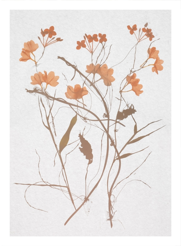 http://tscholitsch.com/files/gimgs/th-5_Herbarium_DIY_5.jpg