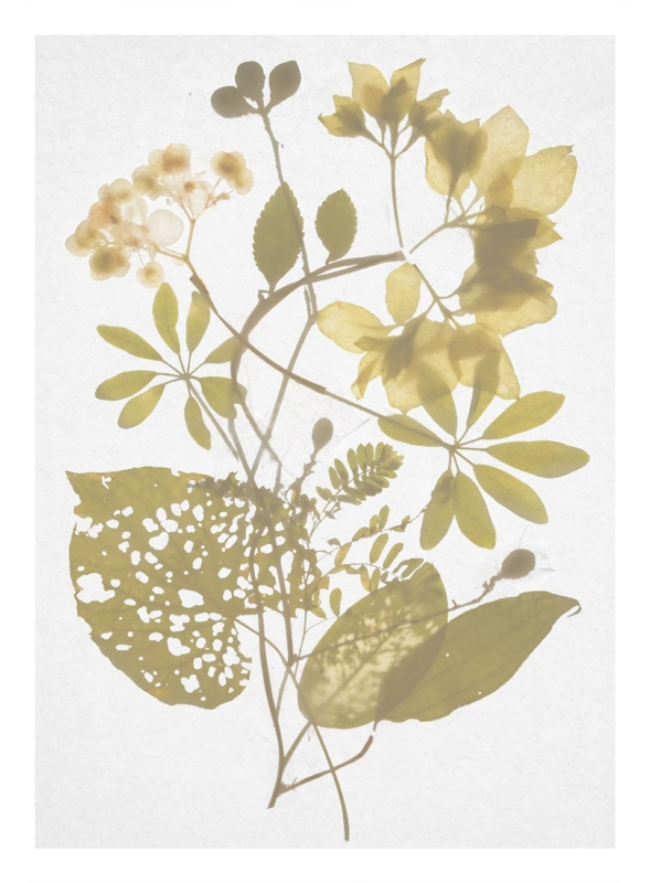 http://tscholitsch.com/files/gimgs/th-5_Herbarium_DIY_6.jpg
