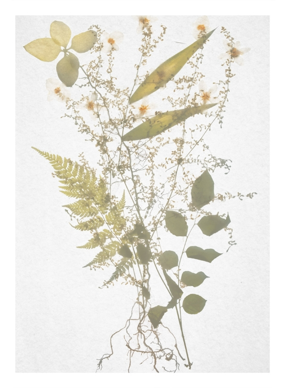 http://tscholitsch.com/files/gimgs/th-5_Herbarium_DIY_7.jpg