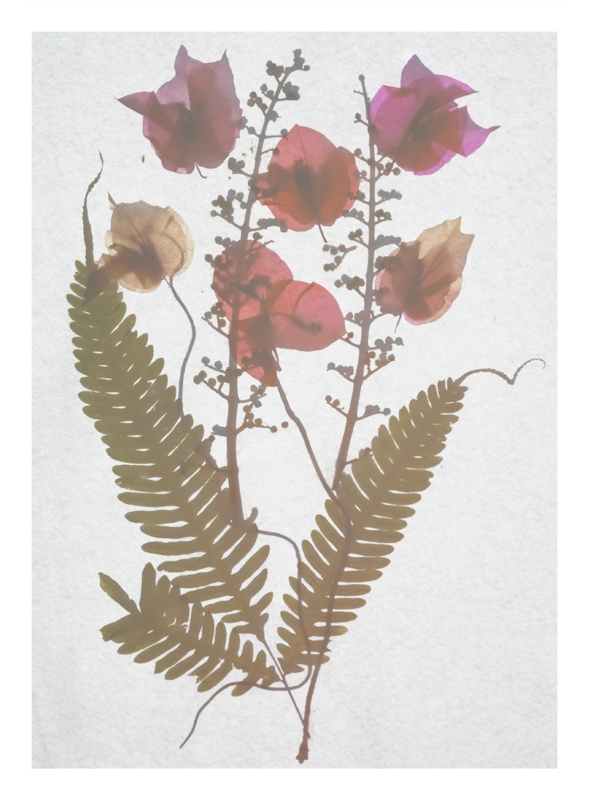 http://tscholitsch.com/files/gimgs/th-5_Herbarium_DIY_8.jpg